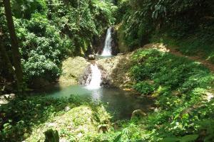 Regenwald in Grenada